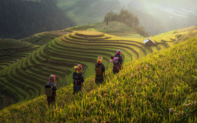 A la découverte du poivre blanc de Kampot / Expédition au Cambodge