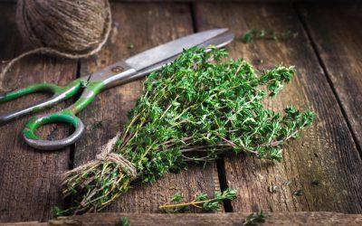 A la découverte des Herbes de Provence – Expedition en Provence